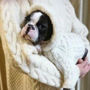 犬服 お揃い セーター