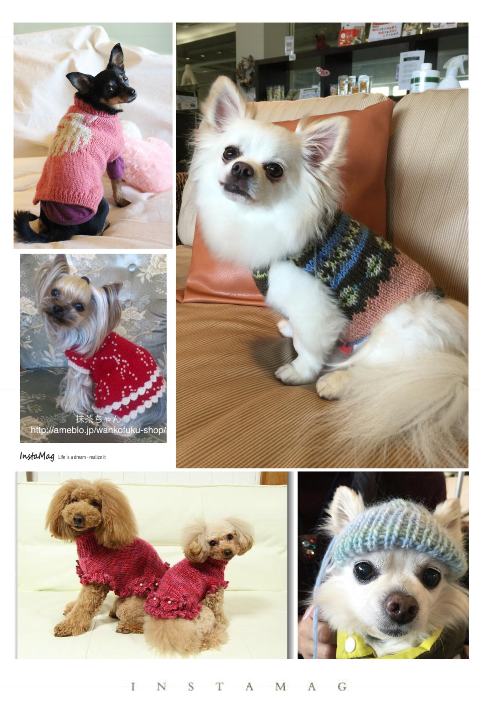 犬 ニット 編み物教室