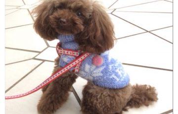 犬ニット、編み込み