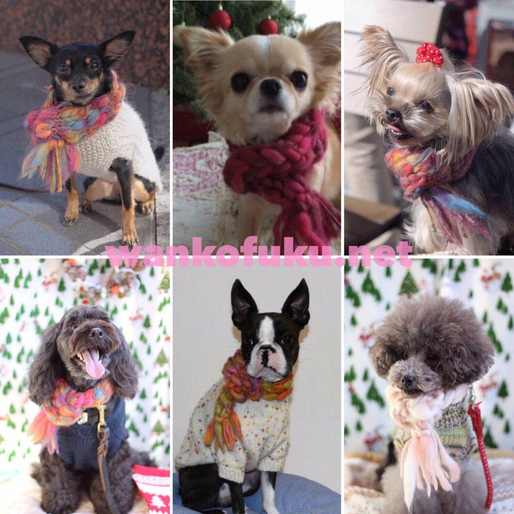 編み物教室,マフラー,犬