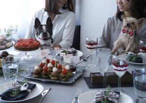 犬、パーティー